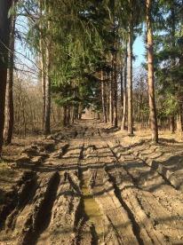 muddy-road-694774_960_720